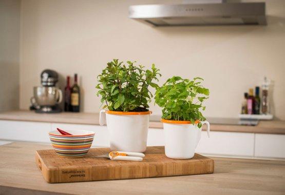Coltiva le tue erbe aromatiche