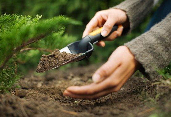 Il miglior inizio per le tue nuove piante