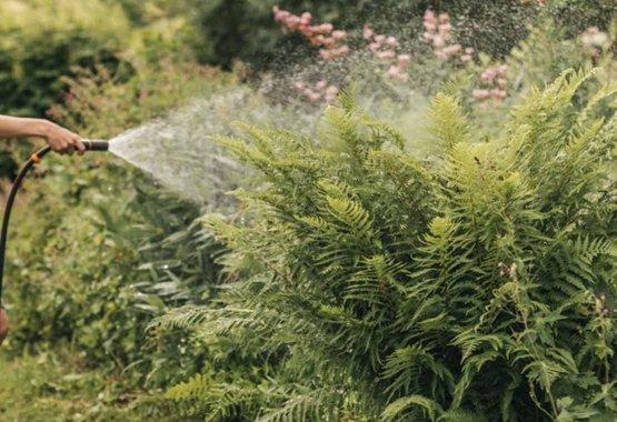 Scegli le piante adatte al clima in cui vivi